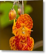 Spotted-touch-me-not And Buds Metal Print