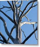 Sprawling Dead Tree Metal Print