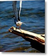 Spread And Tern Metal Print