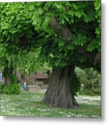 Spreading Chestnut Tree Metal Print