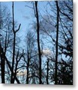 Spring 09  Tree Skyline Metal Print