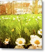 Spring. A Medow Spread With Daisies In Baden-baden, Germany Metal Print