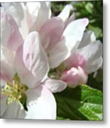 Spring Apple Blossoms Art Prints Apple Tree Baslee Troutman Metal Print