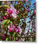 Spring Apple Blossoms- Spring Flowers Metal Print