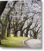 Spring Apple Orchard Metal Print
