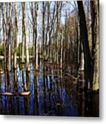 Spring At The Pond Metal Print