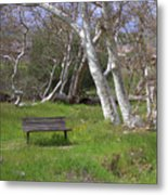Spring Bench In Sycamore Grove Park Metal Print