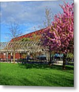 Spring Bloom At Christopher Columbus Park Boston Ma Cherry Blossoms Metal Print
