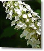 Spring Bloomers 2 Metal Print