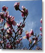 Spring Blooms 2010 Metal Print