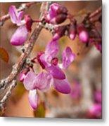 Spring Blooms In Nevada Metal Print