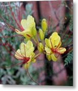 Spring Blooms Yellow Red 052814a Metal Print