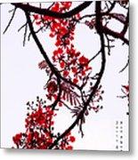 Spring Blossom In Maldives. Flamboyant Tree Metal Print