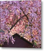Spring Blossom Canopy Metal Print