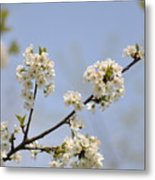 Spring Blossom Metal Print