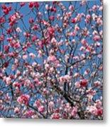 Spring Blossoms Against Blue Sky Metal Print