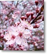 Spring Blossoms Art  Pink Tree Blossom Baslee Troutman Metal Print