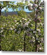 Spring Blossoms Day Metal Print