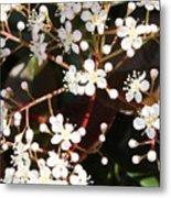 Spring Blossoms Macro Metal Print