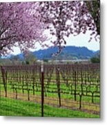 Spring Blossoms Near Calistoga Metal Print by Charlene Mitchell