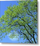Spring Blue And Green Metal Print