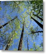 Spring Canopy Skylight Metal Print