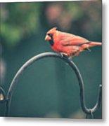 Spring Cardinal Metal Print