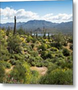 Spring Color In The Desert Metal Print