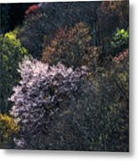 Spring Colors On The Parkway Metal Print