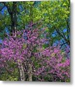 Spring Colors Metal Print