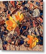 Spring Crocus Flower Metal Print