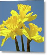 Spring Daffodil Flowers Art Prints Canvas Framed Baslee Troutman Metal Print