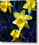 Spring Daffodills Metal Print