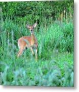 Spring Deer Metal Print
