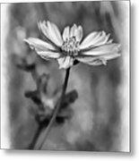Spring Desires 2 Bw Metal Print
