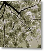 Spring Display Metal Print