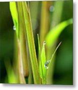 Spring Droplets Metal Print