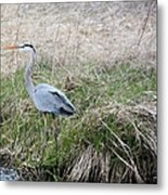 Spring Fishing Metal Print