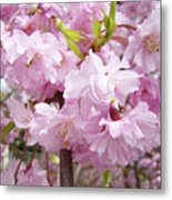 Spring Flowering Trees Art Prints Pink Flower Blossoms Baslee Metal Print