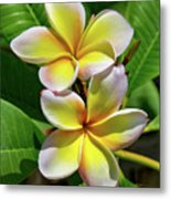 Spring Flowers 8 Metal Print