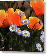 Spring Flowers In Payson Arizona Metal Print