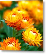 Spring Flowers In The Afternoon Metal Print