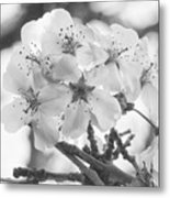 Spring Flowers - White Metal Print