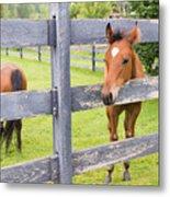 Spring Foal Metal Print