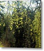 Spring Foliage Metal Print