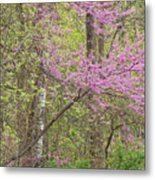 Spring Forest With Redbud Metal Print