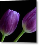 Spring Forward Metal Print by Tracy Hall