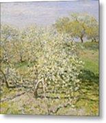 Spring. Fruit Trees In Bloom Metal Print