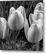 Spring Garden - Act One 2 Bw Metal Print
