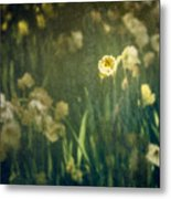 Spring Garden With Narcissus Flowers Metal Print